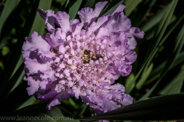 heide-banksia-park-landscape-flowers-110