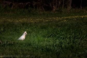 heide-banksia-park-landscape-flowers-114