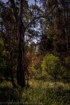 heide-banksia-park-landscape-flowers-115
