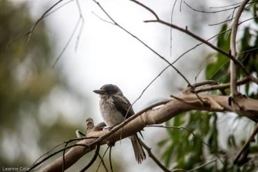 melbourne-banyule-flats-birds-112