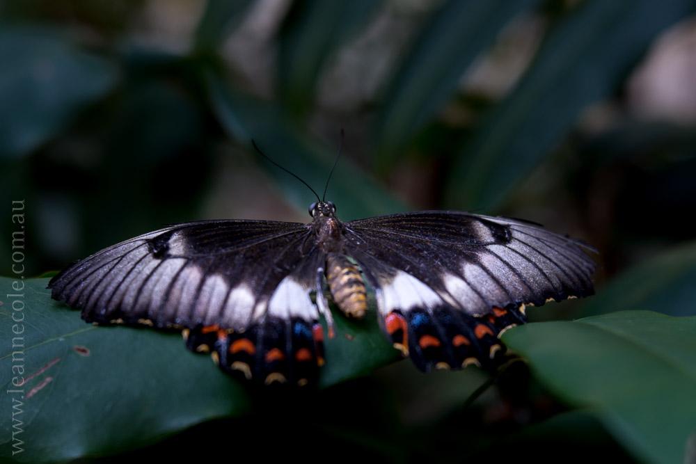 zoo-butterfly-house-lensbaby-velvet56-5724