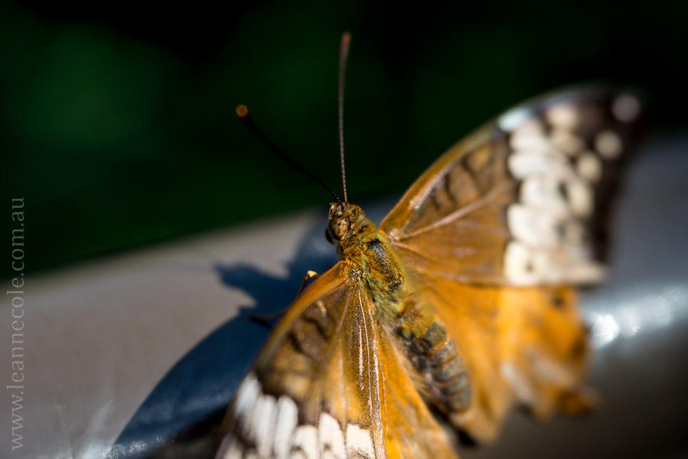 zoo-butterfly-house-lensbaby-velvet56-5765