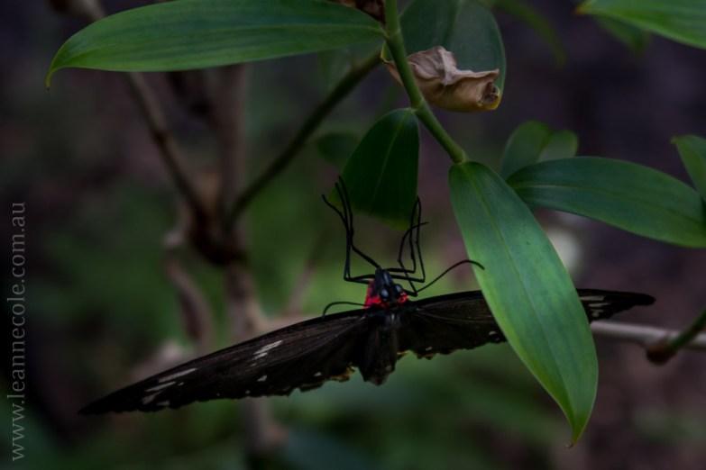 zoo-butterfly-house-lensbaby-velvet56-5788