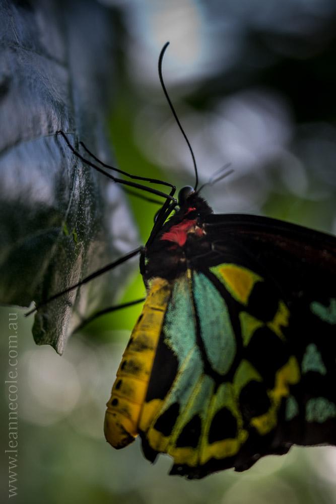 zoo-butterfly-house-lensbaby-velvet56-5809