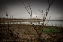 bonnie-doon-fog-winter-1034