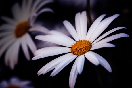 daisy-zoom-lens-williamstown-melbourne