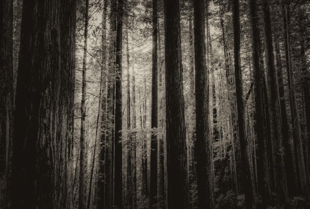 the-shady-tree