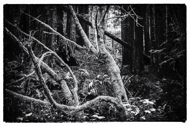 crow-canyon-journal-mm-3-33-another-shot-from-our-purisima-creek-hike
