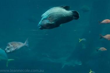 melbourne-aquarium-fish-turtles-penguins-105
