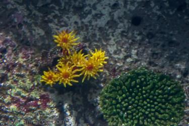 melbourne-aquarium-fish-turtles-penguins-113