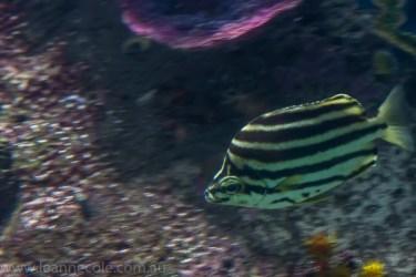 melbourne-aquarium-fish-turtles-penguins-114