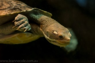 melbourne-aquarium-fish-turtles-penguins-122