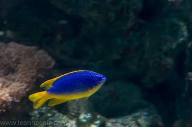 melbourne-aquarium-fish-turtles-penguins-128