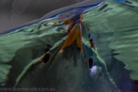 melbourne-aquarium-fish-turtles-penguins-136
