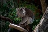 phillip-island-wildlife-park-5599