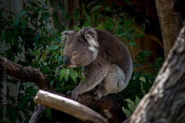 phillip-island-wildlife-park-5599