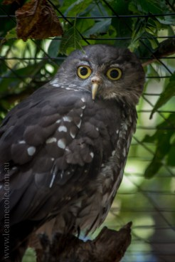phillip-island-wildlife-park-5687