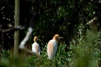 phillip-island-wildlife-park-5905