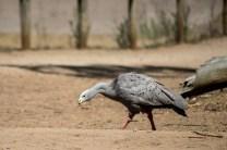 phillip-island-wildlife-park-5972
