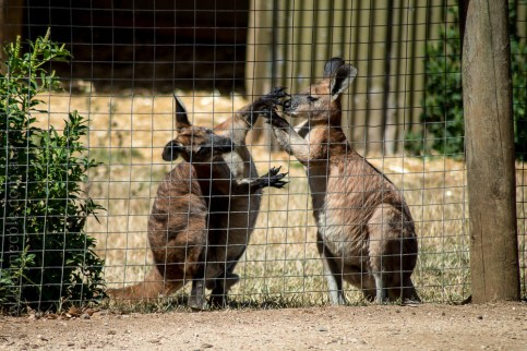 phillip-island-wildlife-park-5982