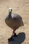phillip-island-wildlife-park-6077