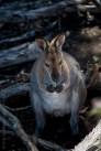 phillip-island-wildlife-park-6148