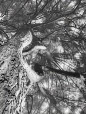 14/ THE SHADY TREE
