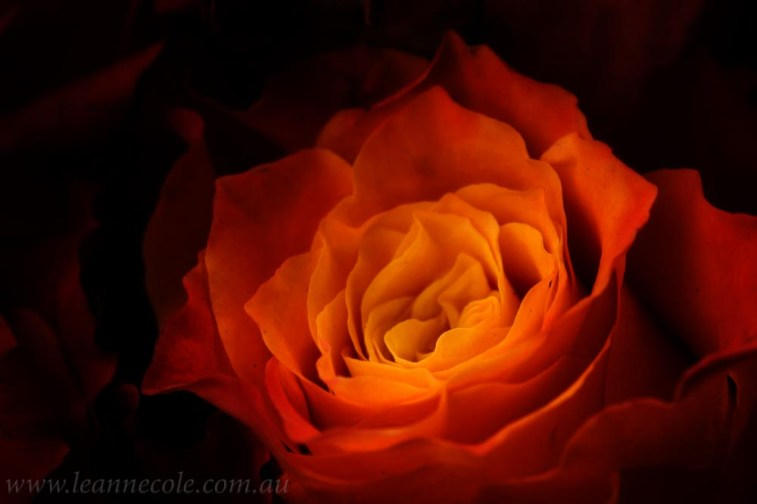 flower-garden-show-macro-edit-1041