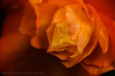 flower-garden-show-macro-edit-1046