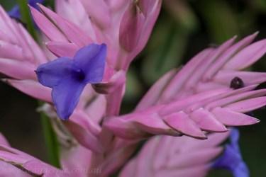 flower-garden-show-macro-lr-1046