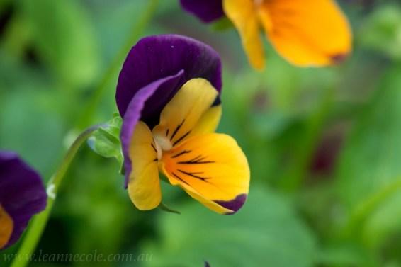 flower-garden-show-macro-lr-1050