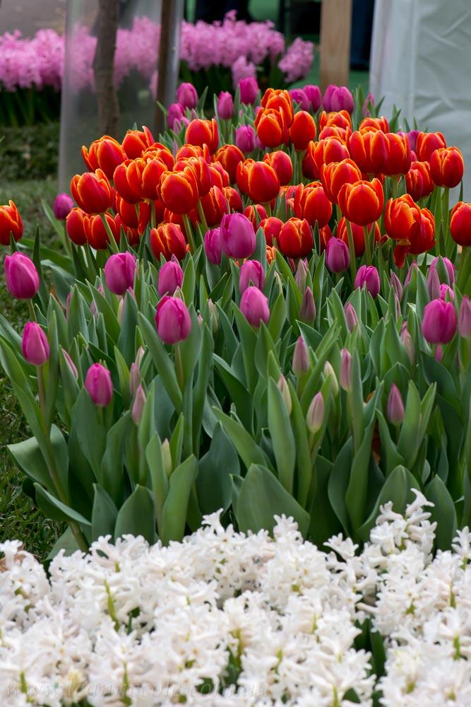 flower-garden-show-macro-lr-1062