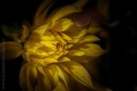 flowers-macro-mifgs-melbourne-9725