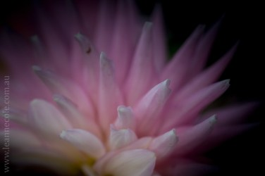 flowers-macro-mifgs-melbourne-9740
