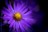 flowers-macro-mifgs-melbourne-9745