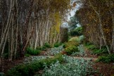 alowyn-gardens-winter-yarra-glen-3354