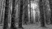 5/THE SHADY TREE