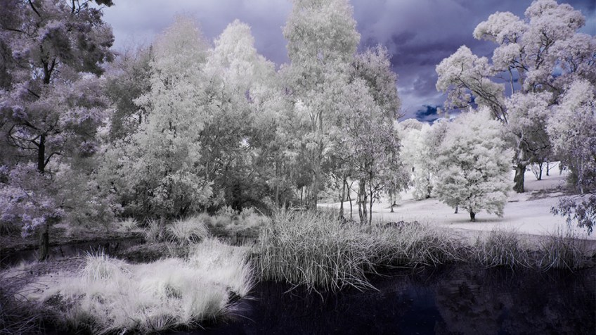 pond-binnak-park-colours-infrared