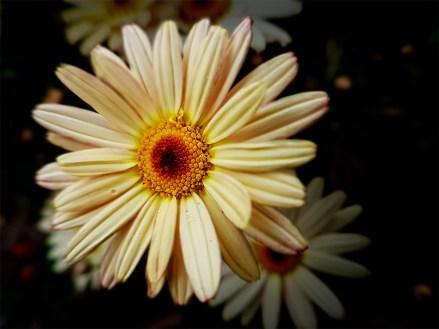 flowers-garden-phone-strumanoptics-wideangle