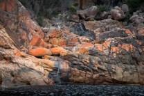 tasmania-trip-wineglassbay-boat-cruise-7894