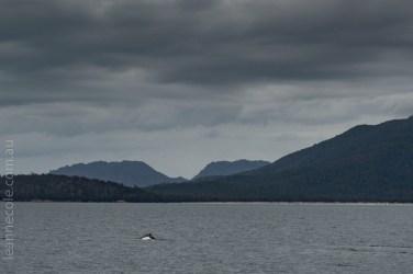 tasmania-trip-wineglassbay-boat-cruise-8099