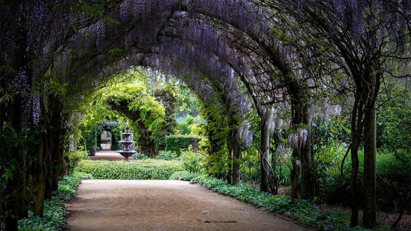 alowyn-gardens-wisteria-lensbaby-velvet85