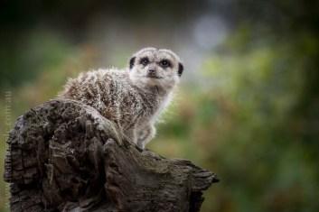 melbourne-zoo-animals-1on1-1701