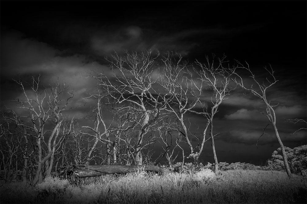 deadtrees-infrared-monochrome-cape-otway