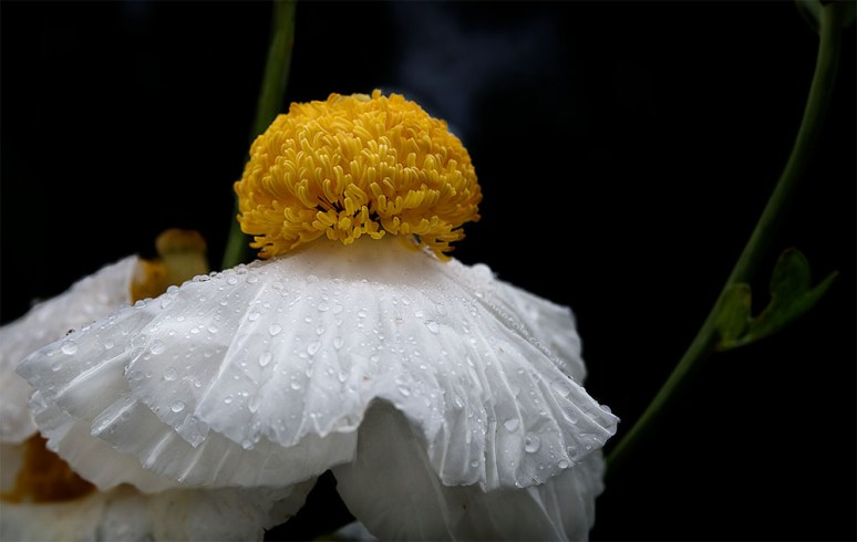 flower-lensbaby-velvet85-macro-alowyngardens