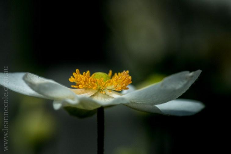 flowers-macro-mifgs-melbourne-9684
