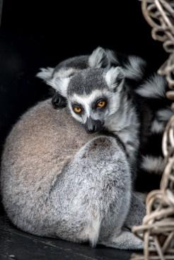 melbourne-zoo-animals-tamron-150600-4342