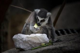 melbourne-zoo-animals-tamron-150600-4408