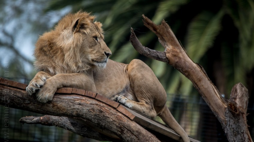melbourne-zoo-animals-tamron-150600-4502