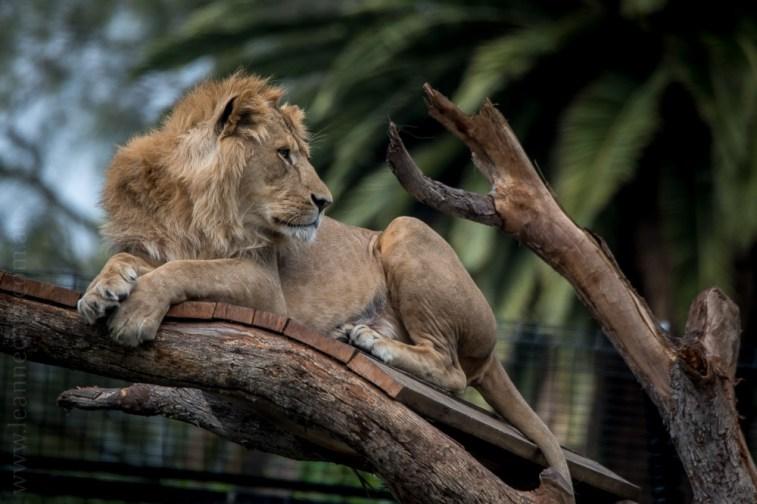 melbourne-zoo-animals-tamron-150600-4502